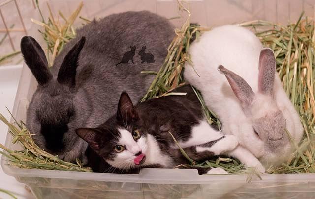 ウサギの間の子猫