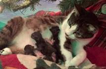 クリスマスツリーの下で子猫を生んだ母猫