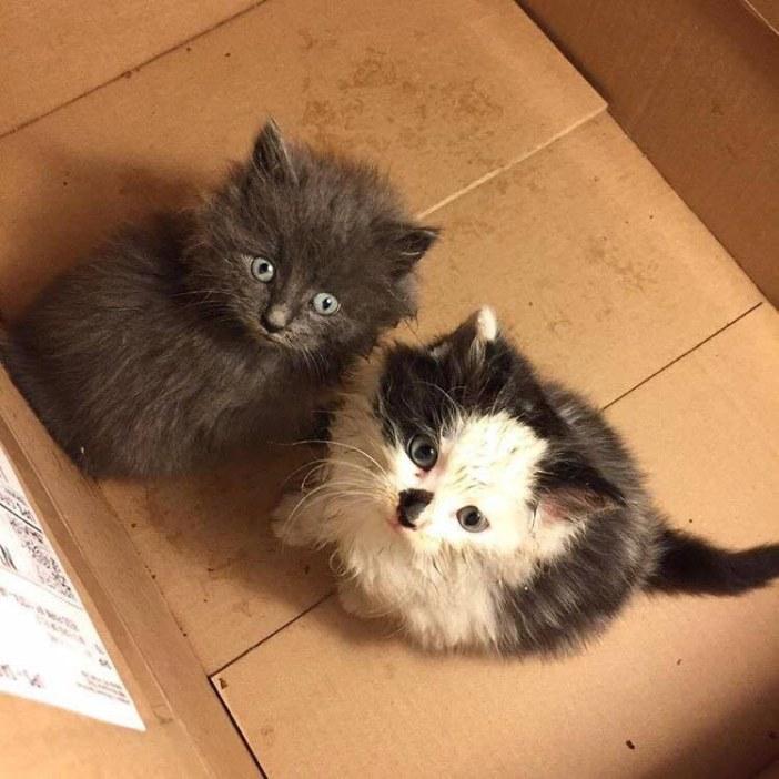 見上げる2匹の子猫