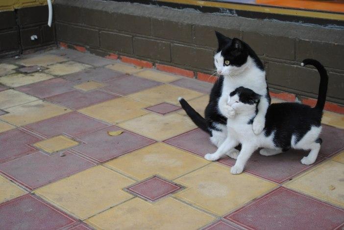 子猫の口を押さえる母猫