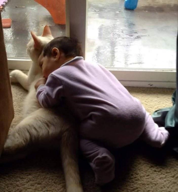 ハグする赤ちゃんと猫