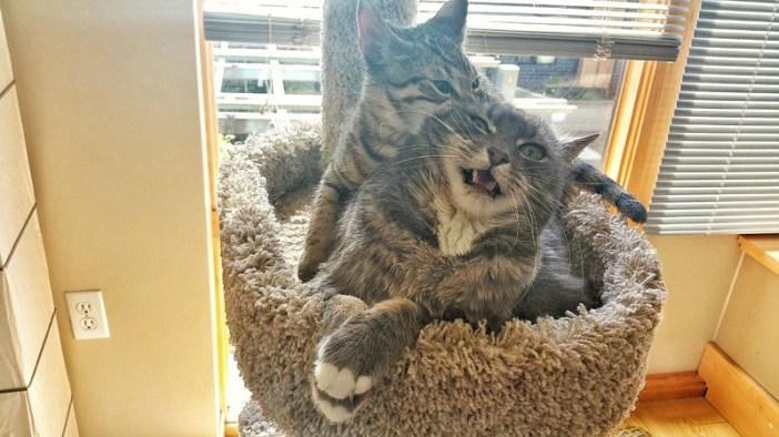 不意打ち子猫