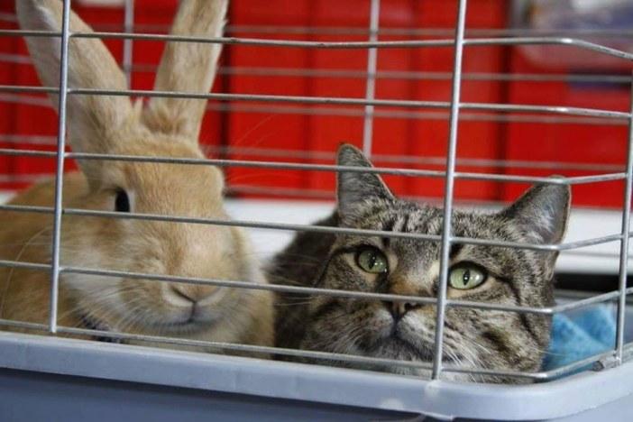 一緒のケージに入る猫とウサギ