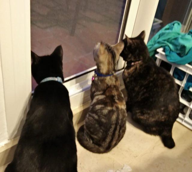 同居猫と猫