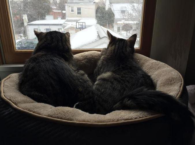 外を眺める猫