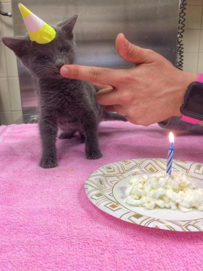 ケーキ子猫