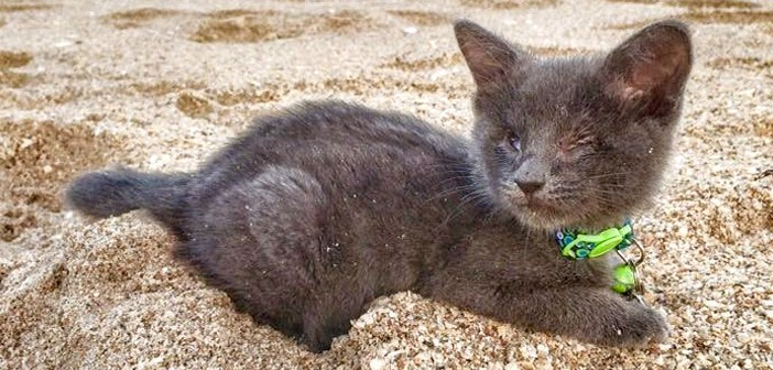 余命1ヶ月の子猫