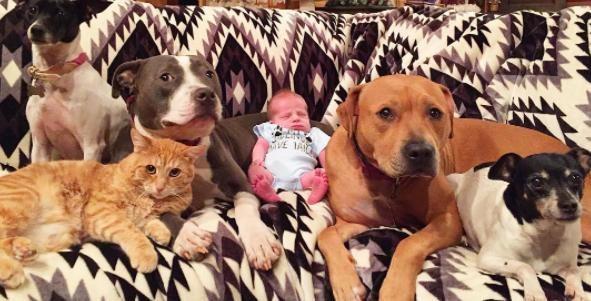 猫と犬と赤ちゃん