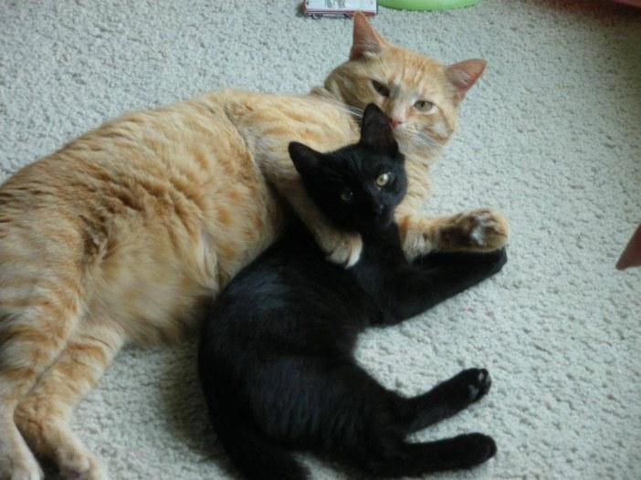 同居猫と一緒