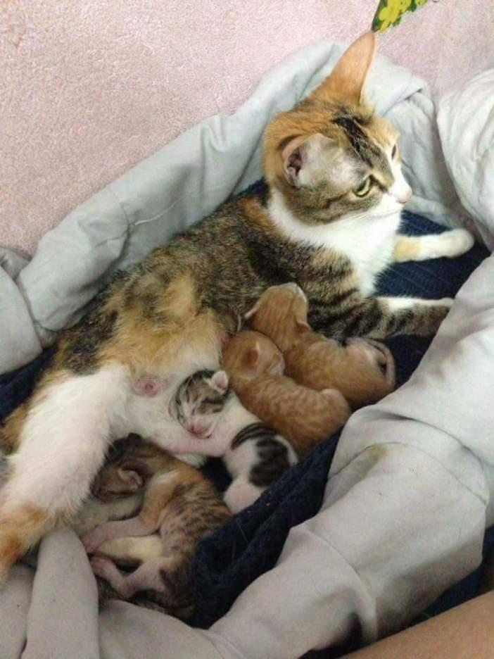母猫が子猫を生む