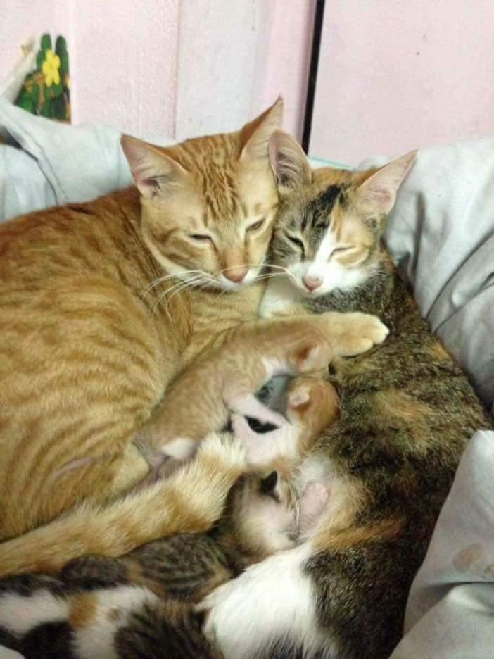 母猫と抱き合う父猫