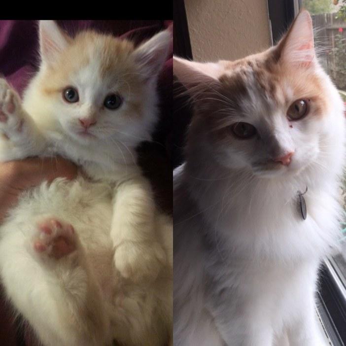 成長した子猫
