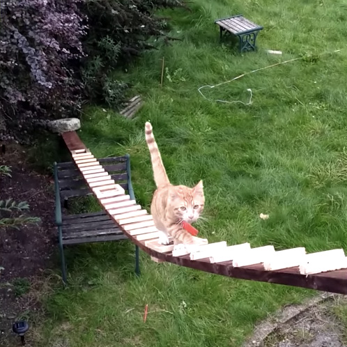 はしごを登ってくる猫