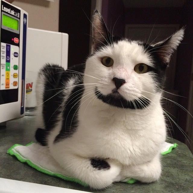 いい表情のヒゲ猫