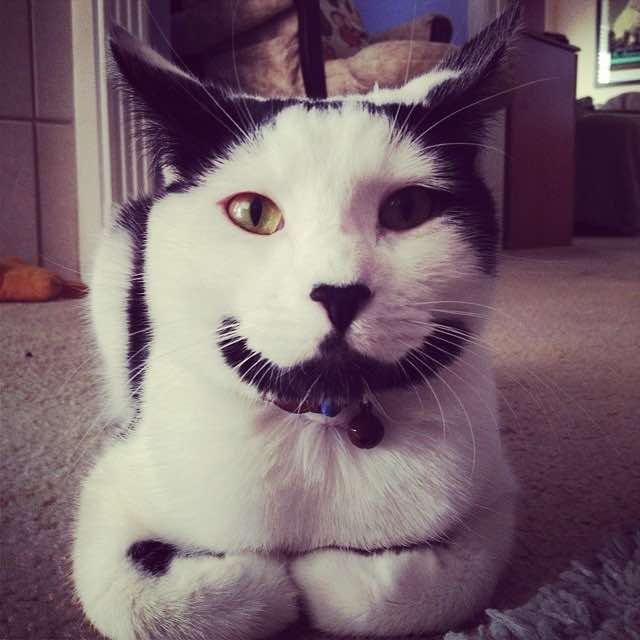 香箱座りのヒゲ猫