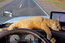 トラックの猫