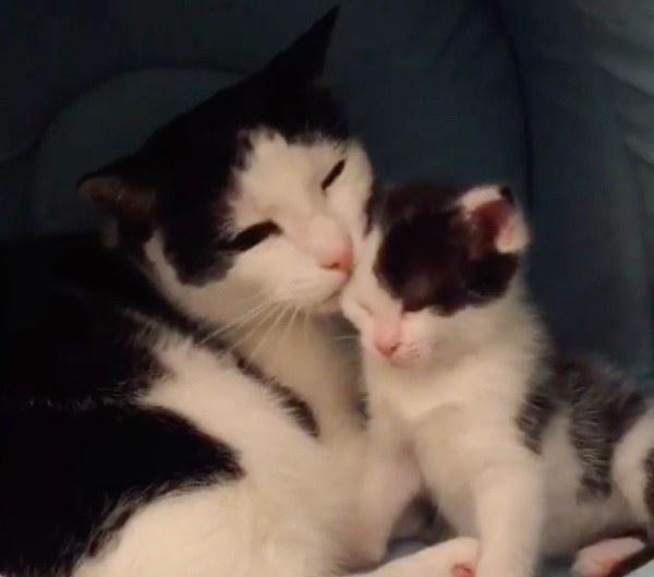 子猫大好きお父さん