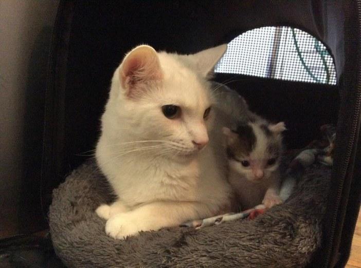 子猫と一緒の猫