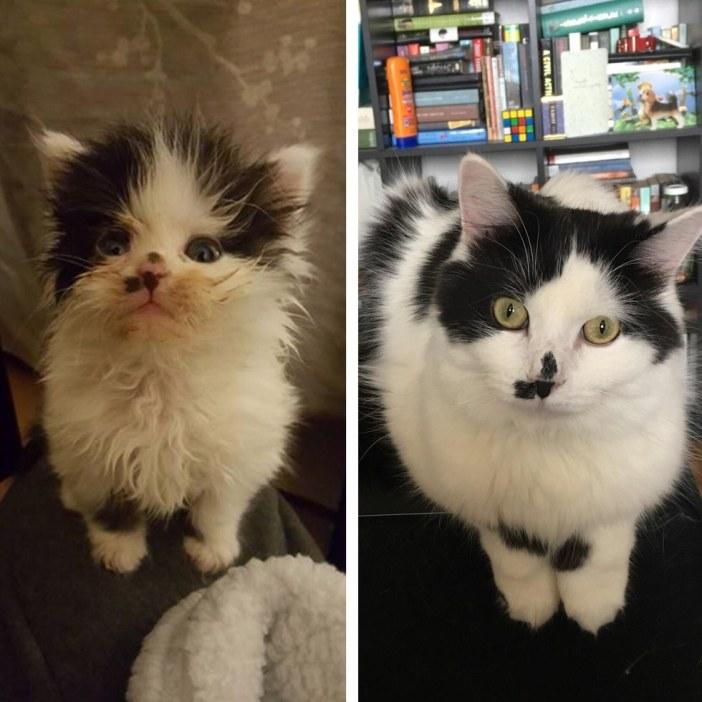 猫の今と昔の比較