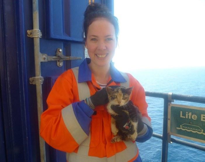 石油発掘所で見つかった子猫