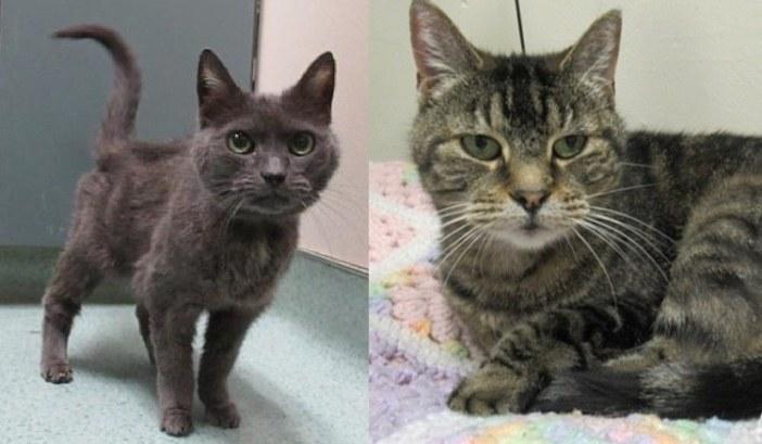 2匹の老猫