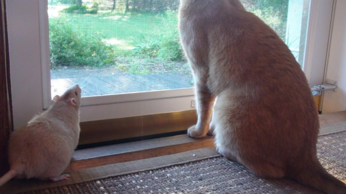 猫を見るネズミ