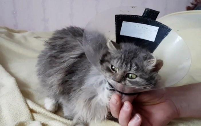 なでなで猫