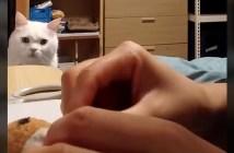 オモチャを見守る猫