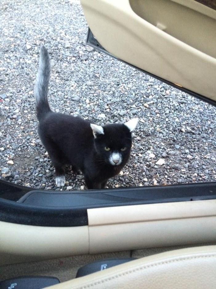 車を見る猫