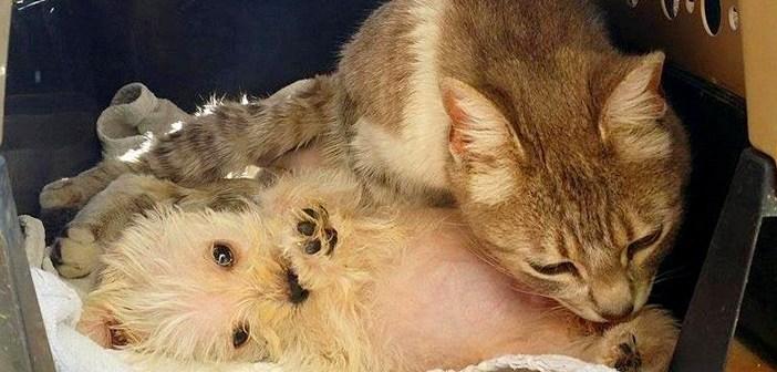 子犬を育てる猫