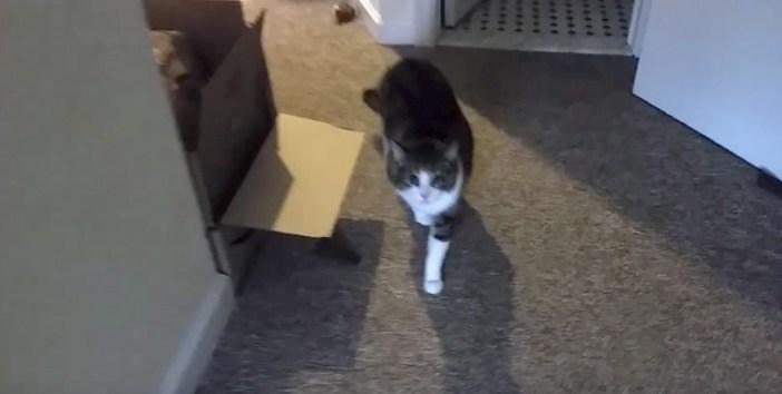 迫って来る猫