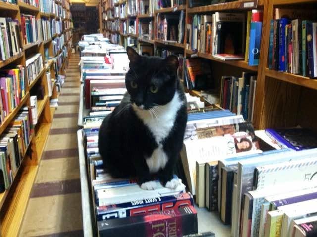 本に座る猫