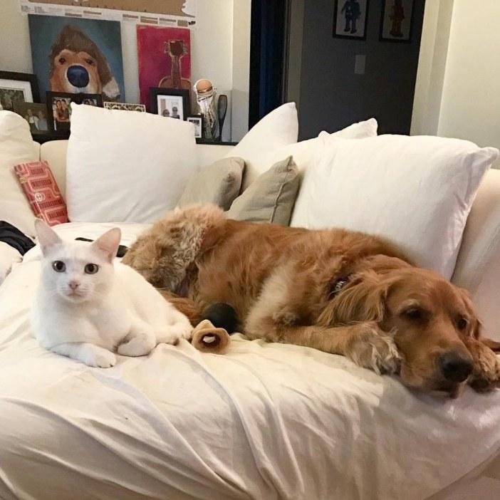 まったり中の猫と犬