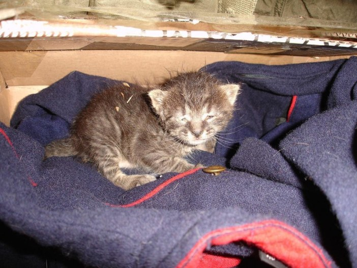 寒さから救い出された子猫