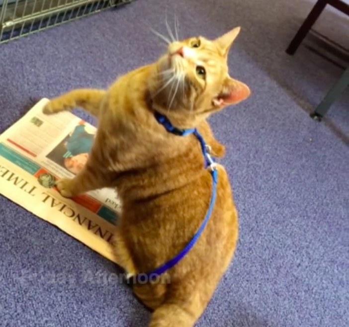 新聞が気になる猫
