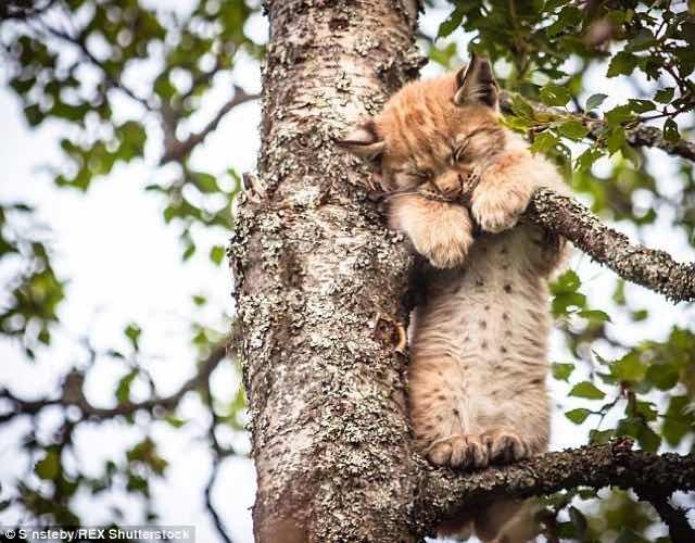 木の上で眠る猫