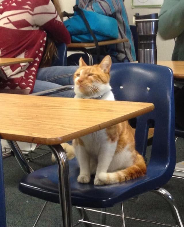授業を受ける猫