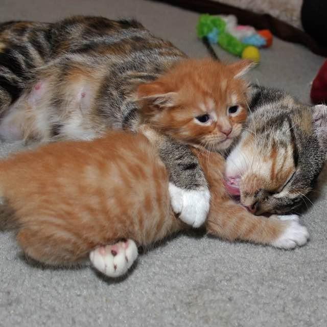 幸せそうな母猫