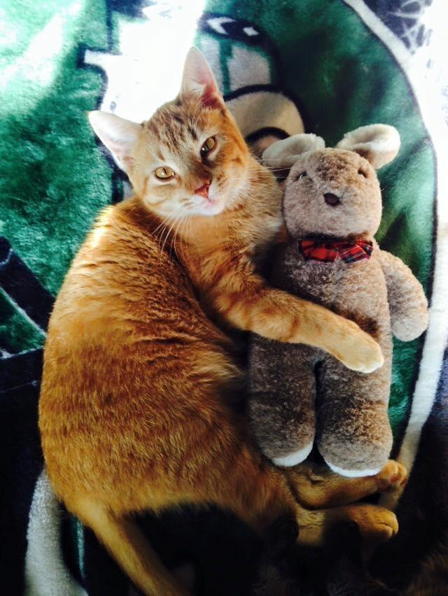ぬいぐるみを抱く猫