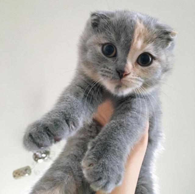 持ち上げられる猫