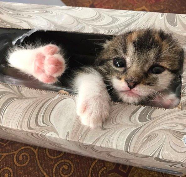 ティッシュ箱と子猫