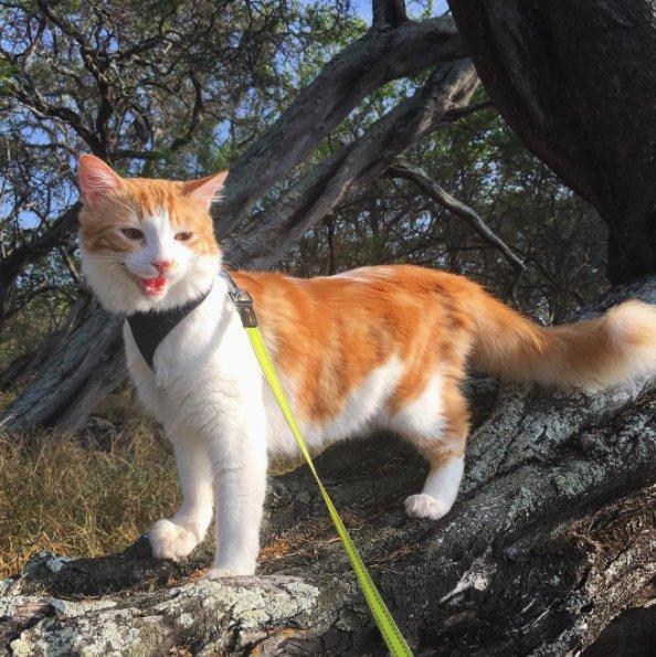 アウトドア猫