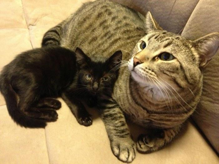 見あげる子猫と猫