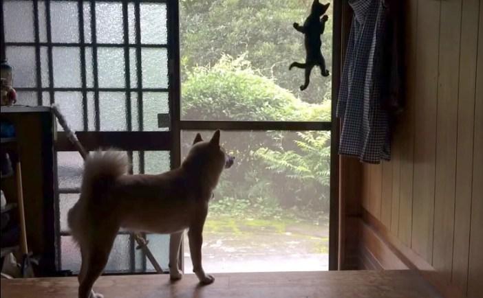 子猫が心配な犬