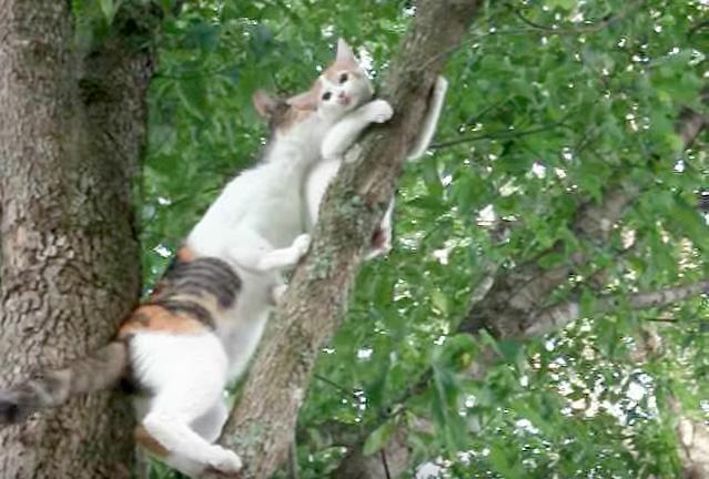 子猫を救出に向かう母猫