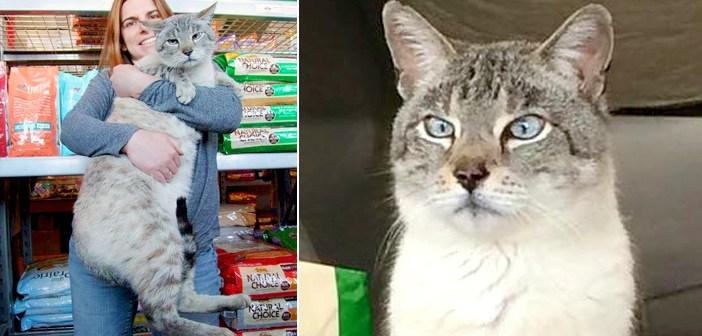 大きな猫店員