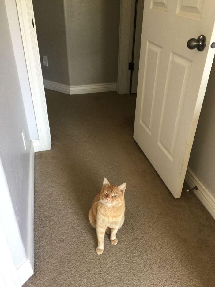 朝の挨拶をする猫