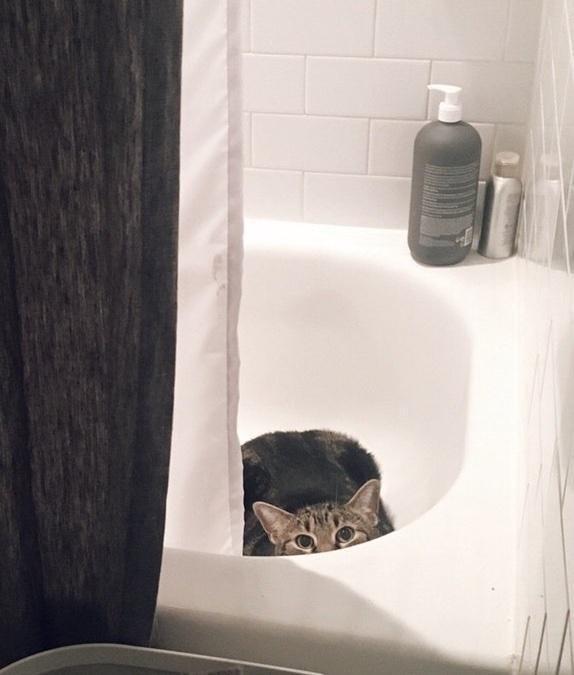 お風呂場に隠れる猫