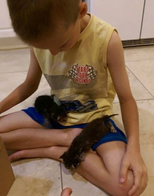 子猫と少年