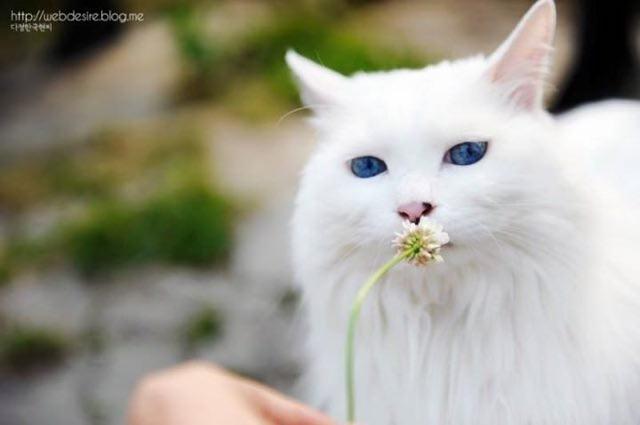 気になる猫